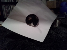 Helping with the LP sleeves.