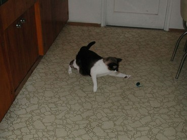 Kitty playing in 2002.
