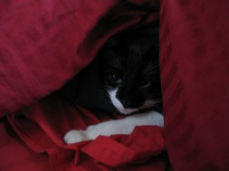 Kitty undercover.