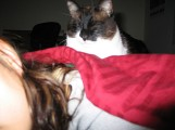 Kitty sleeping on my back.