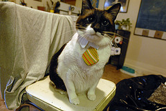 Kitty McKitterson, Esq. on the job.