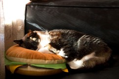 Kitty dreaming of cheezburgers.